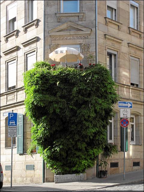 senkrechte Grünanlage an der Ecke Marienstraße/Theaterstraße