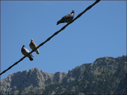 auf Draht seiende Tauben
