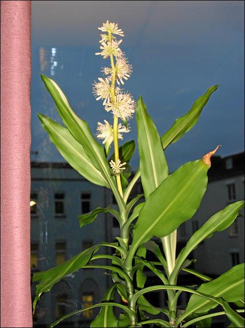 unbekannte Blüten, wunderbar aussehend, merkwürdig riechend