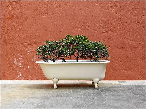 zweckentfremdete Badewanne hinter dem Liceo de Taoro