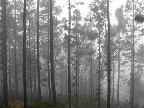 In wolkengetränkten Wäldern