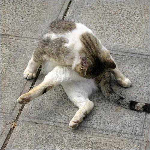 reinliche Katze