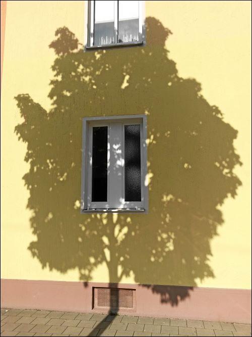 Schatten eines Straßenbaumes in der Fürther Simonstraße