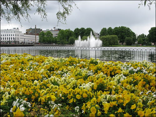 Blumenmeer in Eskilstuna