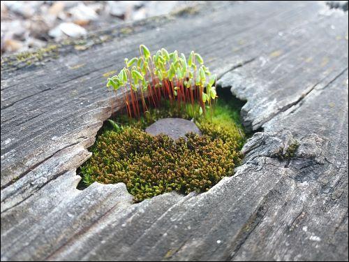 Mini-Oase auf einem Dachbrett