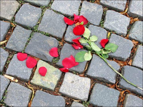 In Auflösung begriffene Rose am Fürther Hauptbahnhof