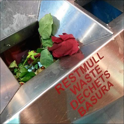 Weggeworfene Rose
