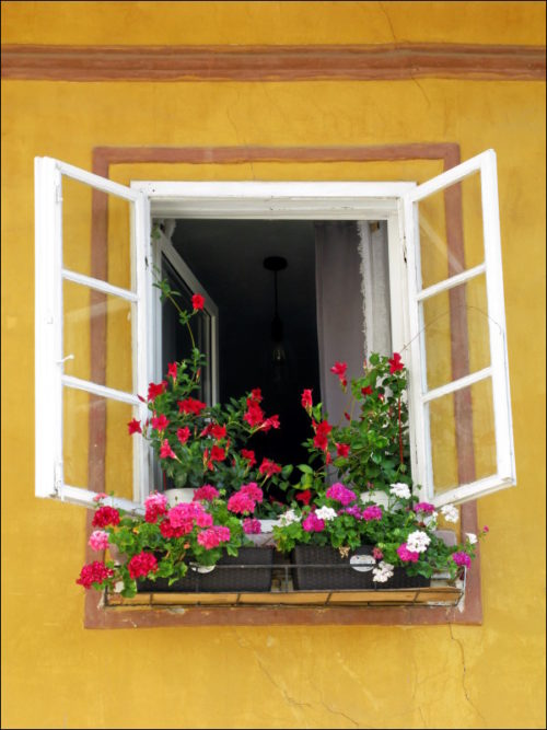 Üppiger Blumenschmuck ist allerorten anzutreffen