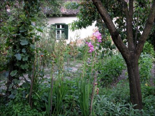 Nicht ganz klein, und immer noch fein: Der Hausgarten von Frau und Herrn Schaas