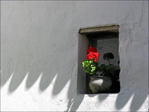 Blümerantes Spiel von Licht und Schatten