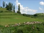 Semi-italienisches Hirten-Idyll