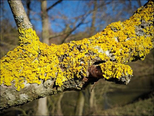 Impressionen aus dem Naturschutzgebiet »Hainberg«