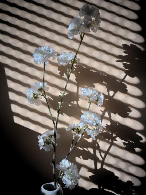 Künstlerisches Spiel mit Licht und Schatten