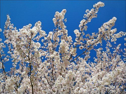 Frühling in Fürth