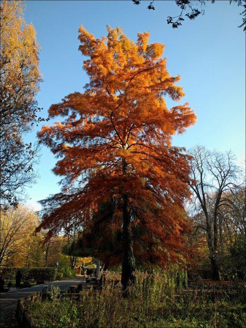 Herbstlich bunter Baum im Stadtpark