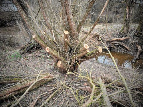 Brutaler Baumrückschnitt im Naturschutzgebiet Hainberg